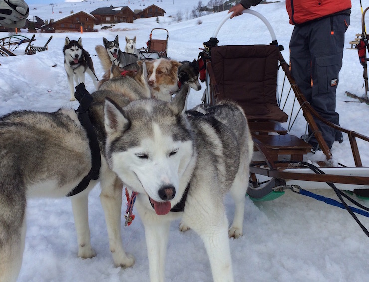 Dog-sledding in Alpe d'Huez